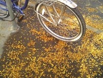Bicycle tire and fall leaves