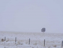 A single tree in the snowy fog