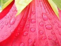 Rain on a flower