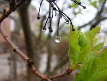 Raindrop reflection
