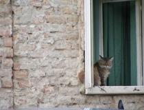 A cat in Osijek, Croatia.