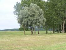 Osijek countryside
