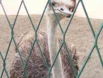 Emu in Osijek Croatia