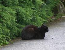 Cat in Osijek Croatia