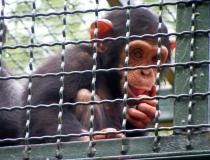 Monkey in in Osijek Croatia