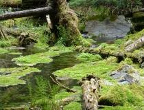 A mossy creek