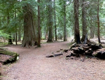 Ross Creek Giant Cedars Trail