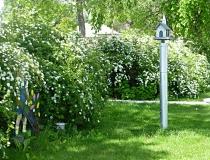 Annabelle Watering Flowers  - Taylor, Nebraska's Villagers