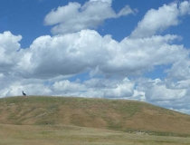 A metal elk on a hill in Wyoming
