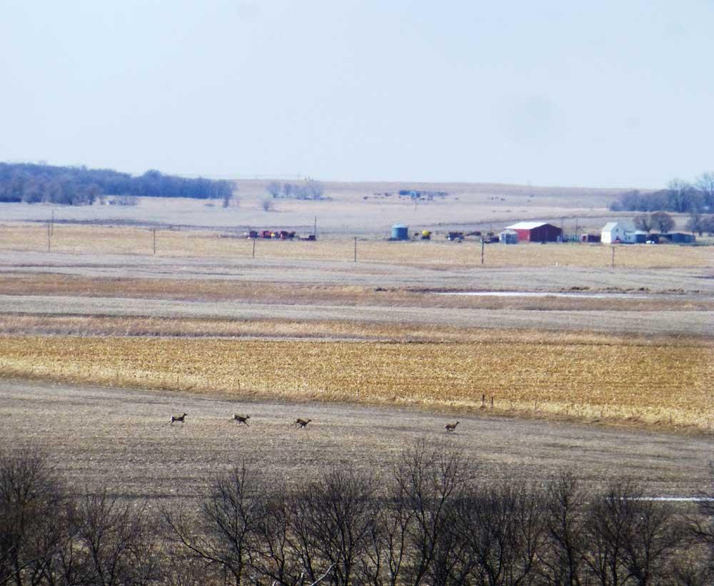 Deer running across South Dakota fields
